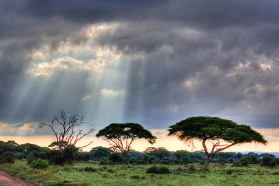 Fotoalbum von Malindi.info - 4 Tage Safari 2018 - Tsavo East, West & Amboseli[ Foto 82 von 102 ]