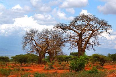 Fotoalbum von Malindi.info - 4 Tage Safari 2018 - Tsavo East, West & Amboseli[ Foto 85 von 102 ]