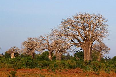 Fotoalbum von Malindi.info - 4 Tage Safari 2018 - Tsavo East, West & Amboseli[ Foto 99 von 102 ]
