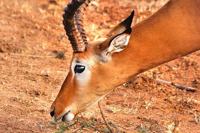 Fotoalbum von Malindi.info - Safari 2 Tage und 1 Nacht in Tsavo East 2019[ Foto 3 von 83 ]