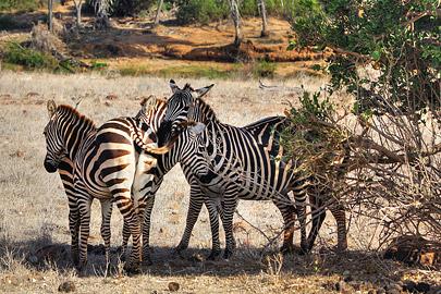Fotoalbum von Malindi.info - Safari 2 Tage und 1 Nacht in Tsavo East 2019[ Foto 5 von 83 ]
