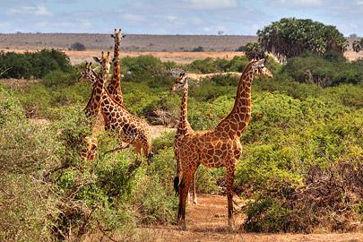 Fotoalbum von Malindi.info - Safari 2 Tage und 1 Nacht in Tsavo East 2019[ Foto 11 von 83 ]