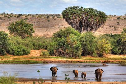 Fotoalbum von Malindi.info - Safari 2 Tage und 1 Nacht in Tsavo East 2019[ Foto 12 von 83 ]