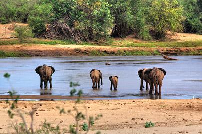 Fotoalbum von Malindi.info - Safari 2 Tage und 1 Nacht in Tsavo East 2019[ Foto 13 von 83 ]