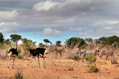 Fotoalbum von Malindi.info - Safari 2 Tage und 1 Nacht in Tsavo East 2019[ Foto 15 von 83 ]