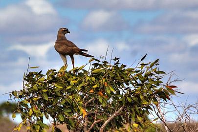Fotoalbum von Malindi.info - Safari 2 Tage und 1 Nacht in Tsavo East 2019[ Foto 17 von 83 ]