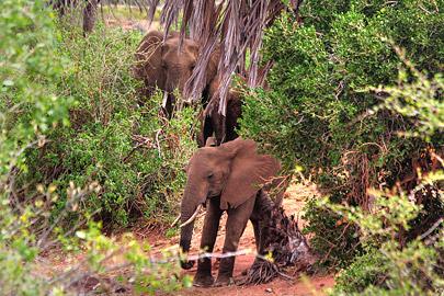 Fotoalbum von Malindi.info - Safari 2 Tage und 1 Nacht in Tsavo East 2019[ Foto 18 von 83 ]
