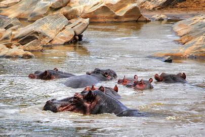 Fotoalbum von Malindi.info - Safari 2 Tage und 1 Nacht in Tsavo East 2019[ Foto 19 von 83 ]