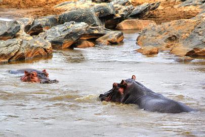 Fotoalbum von Malindi.info - Safari 2 Tage und 1 Nacht in Tsavo East 2019[ Foto 20 von 83 ]
