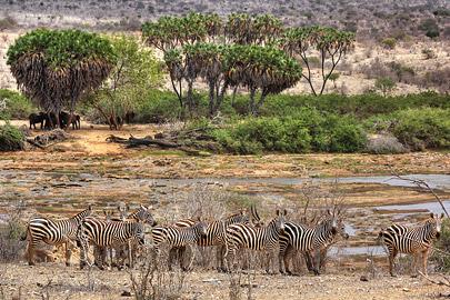 Fotoalbum von Malindi.info - Safari 2 Tage und 1 Nacht in Tsavo East 2019[ Foto 21 von 83 ]