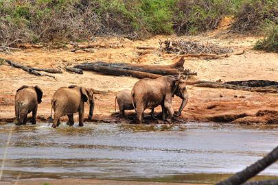Fotoalbum von Malindi.info - Safari 2 Tage und 1 Nacht in Tsavo East 2019[ Foto 22 von 83 ]