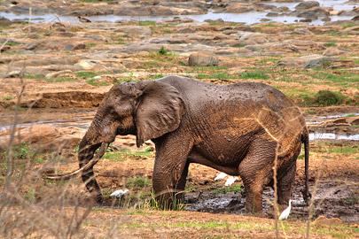 Fotoalbum von Malindi.info - Safari 2 Tage und 1 Nacht in Tsavo East 2019[ Foto 23 von 83 ]