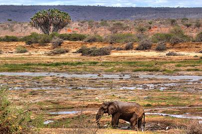 Fotoalbum von Malindi.info - Safari 2 Tage und 1 Nacht in Tsavo East 2019[ Foto 24 von 83 ]