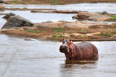 Fotoalbum von Malindi.info - Safari 2 Tage und 1 Nacht in Tsavo East 2019[ Foto 26 von 83 ]