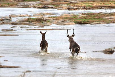 Fotoalbum von Malindi.info - Safari 2 Tage und 1 Nacht in Tsavo East 2019[ Foto 27 von 83 ]