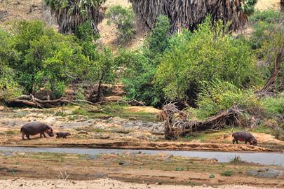 Fotoalbum von Malindi.info - Safari 2 Tage und 1 Nacht in Tsavo East 2019[ Foto 28 von 83 ]