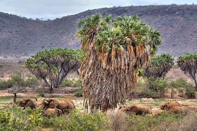 Fotoalbum von Malindi.info - Safari 2 Tage und 1 Nacht in Tsavo East 2019[ Foto 29 von 83 ]