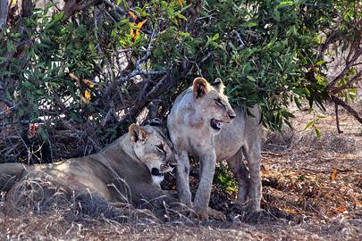 Fotoalbum von Malindi.info - Safari 2 Tage und 1 Nacht in Tsavo East 2019[ Foto 34 von 83 ]