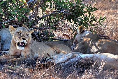 Fotoalbum von Malindi.info - Safari 2 Tage und 1 Nacht in Tsavo East 2019[ Foto 36 von 83 ]