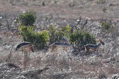 Fotoalbum von Malindi.info - Safari 2 Tage und 1 Nacht in Tsavo East 2019[ Foto 37 von 83 ]