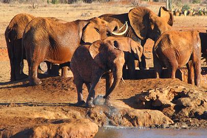 Fotoalbum von Malindi.info - Safari 2 Tage und 1 Nacht in Tsavo East 2019[ Foto 40 von 83 ]