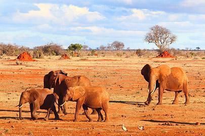 Fotoalbum von Malindi.info - Safari 2 Tage und 1 Nacht in Tsavo East 2019[ Foto 42 von 83 ]