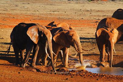 Fotoalbum von Malindi.info - Safari 2 Tage und 1 Nacht in Tsavo East 2019[ Foto 43 von 83 ]