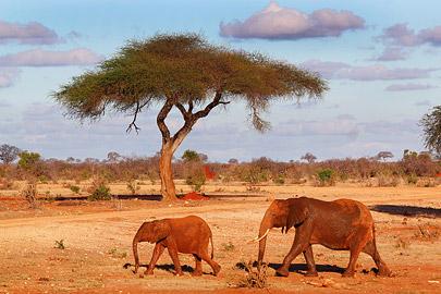 Fotoalbum von Malindi.info - Safari 2 Tage und 1 Nacht in Tsavo East 2019[ Foto 46 von 83 ]