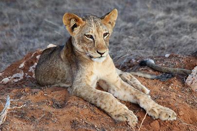 Fotoalbum von Malindi.info - Safari 2 Tage und 1 Nacht in Tsavo East 2019[ Foto 50 von 83 ]