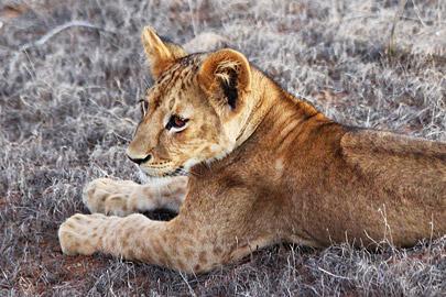 Fotoalbum von Malindi.info - Safari 2 Tage und 1 Nacht in Tsavo East 2019[ Foto 51 von 83 ]