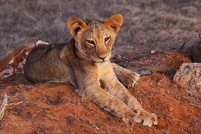 Fotoalbum von Malindi.info - Safari 2 Tage und 1 Nacht in Tsavo East 2019[ Foto 54 von 83 ]