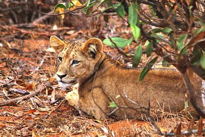 Fotoalbum von Malindi.info - Safari 2 Tage und 1 Nacht in Tsavo East 2019[ Foto 57 von 83 ]