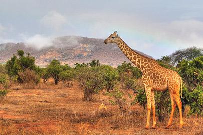 Fotoalbum von Malindi.info - Safari 2 Tage und 1 Nacht in Tsavo East 2019[ Foto 64 von 83 ]