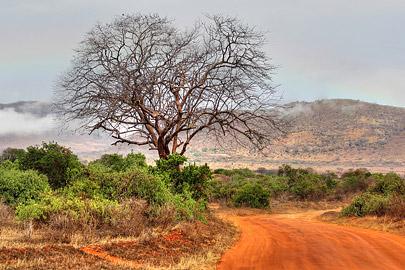 Fotoalbum von Malindi.info - Safari 2 Tage und 1 Nacht in Tsavo East 2019[ Foto 65 von 83 ]