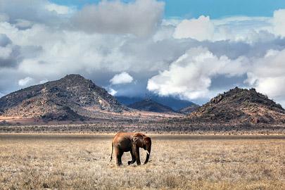Fotoalbum von Malindi.info - Safari 2 Tage und 1 Nacht in Tsavo East 2019[ Foto 73 von 83 ]