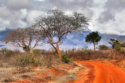 Fotoalbum von Malindi.info - Safari 2 Tage und 1 Nacht in Tsavo East 2019[ Foto 75 von 83 ]
