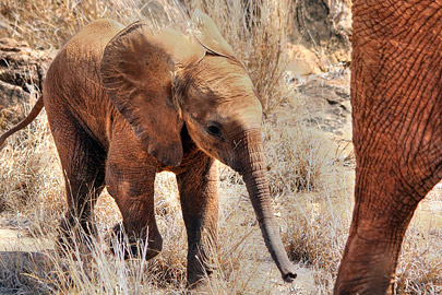 Fotoalbum von Malindi.info - Safari 2 Tage und 1 Nacht in Tsavo East 2019[ Foto 80 von 83 ]