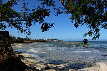 Fotoalbum von Malindi.info - Fotos von Malindi und Umgebung 10/2020[ Foto 7 von 79 ]