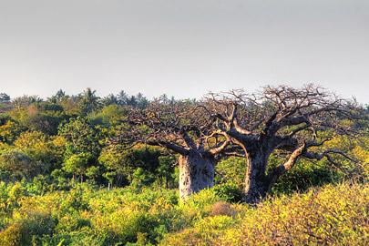 Fotoalbum von Malindi.info - Fotos von Malindi und Umgebung 10/2020[ Foto 33 von 79 ]