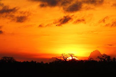 Fotoalbum von Malindi.info - Fotos von Malindi und Umgebung 10/2020[ Foto 41 von 79 ]
