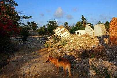Fotoalbum von Malindi.info - Fotos von Malindi und Umgebung 10/2020[ Foto 66 von 79 ]