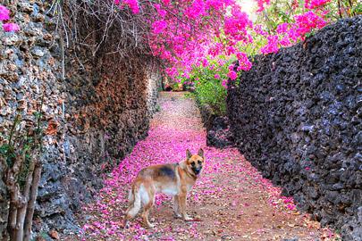 Fotoalbum von Malindi.info - Fotos von Malindi und Umgebung 10/2020[ Foto 71 von 79 ]