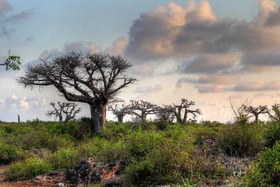 Fotoalbum von Malindi.info - Fotos von Malindi und Umgebung 10/2020[ Foto 72 von 79 ]