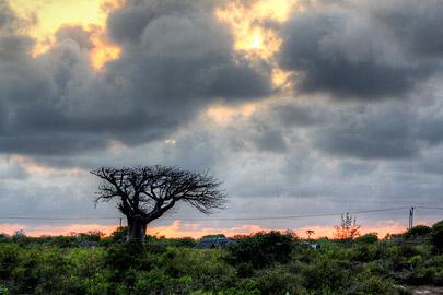 Fotoalbum von Malindi.info - Fotos von Malindi und Umgebung 10/2020[ Foto 75 von 79 ]