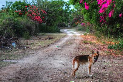 Fotoalbum von Malindi.info - Fotos von Malindi und Umgebung 10/2020[ Foto 76 von 79 ]