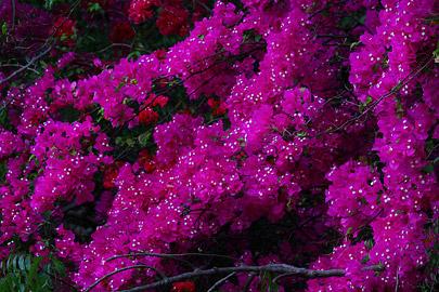 Fotoalbum von Malindi.info - Fotos von Malindi und Umgebung 10/2020[ Foto 77 von 79 ]