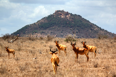 Fotoalbum von Malindi.info - Safari 2 Tage Tsavo East Oktober 2020[ Foto 1 von 84 ]