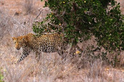 Fotoalbum von Malindi.info - Safari 2 Tage Tsavo East Oktober 2020[ Foto 6 von 84 ]