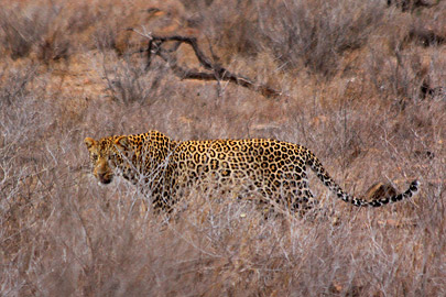 Fotoalbum von Malindi.info - Safari 2 Tage Tsavo East Oktober 2020[ Foto 8 von 84 ]