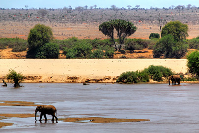 Fotoalbum von Malindi.info - Safari 2 Tage Tsavo East Oktober 2020[ Foto 12 von 84 ]